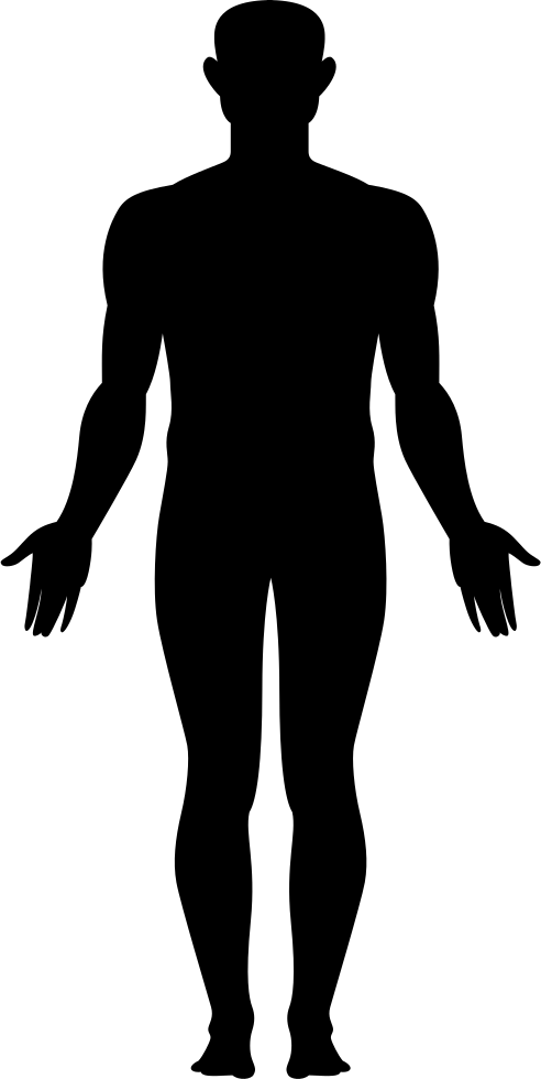 Whole Body Svg Png Icon Free Download (#276582 ... Human Body Icon Png