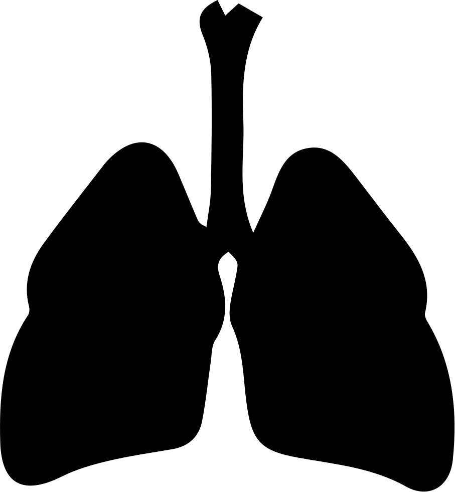 respiratory system svg png icon free download   150600