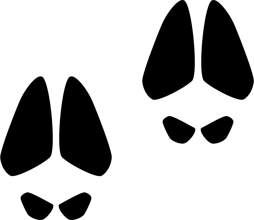 Animal Footprints