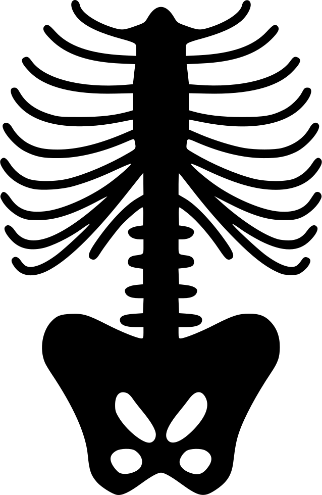 Spine Skeleton