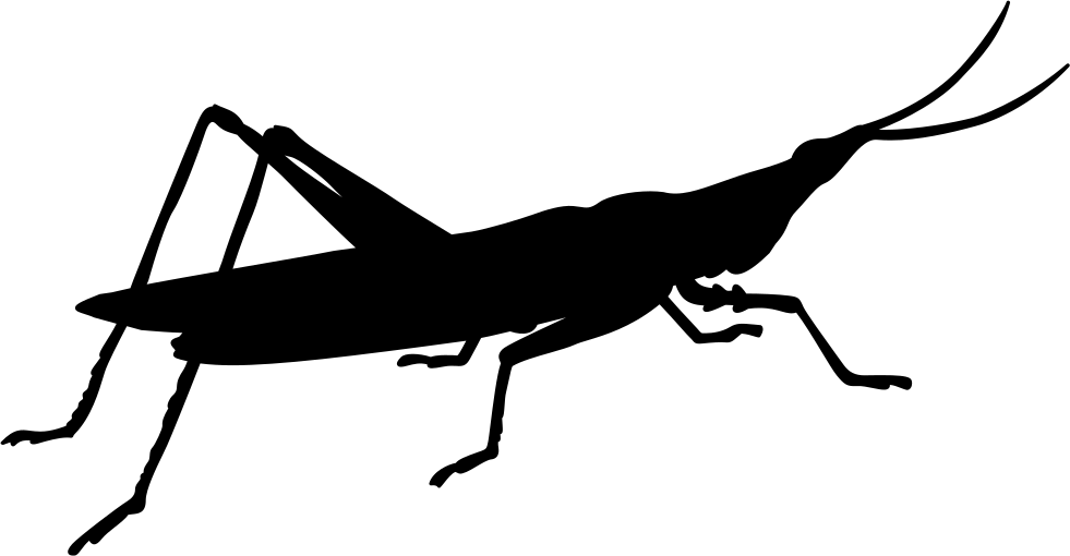 Insect Shape Of Gryllotalpa