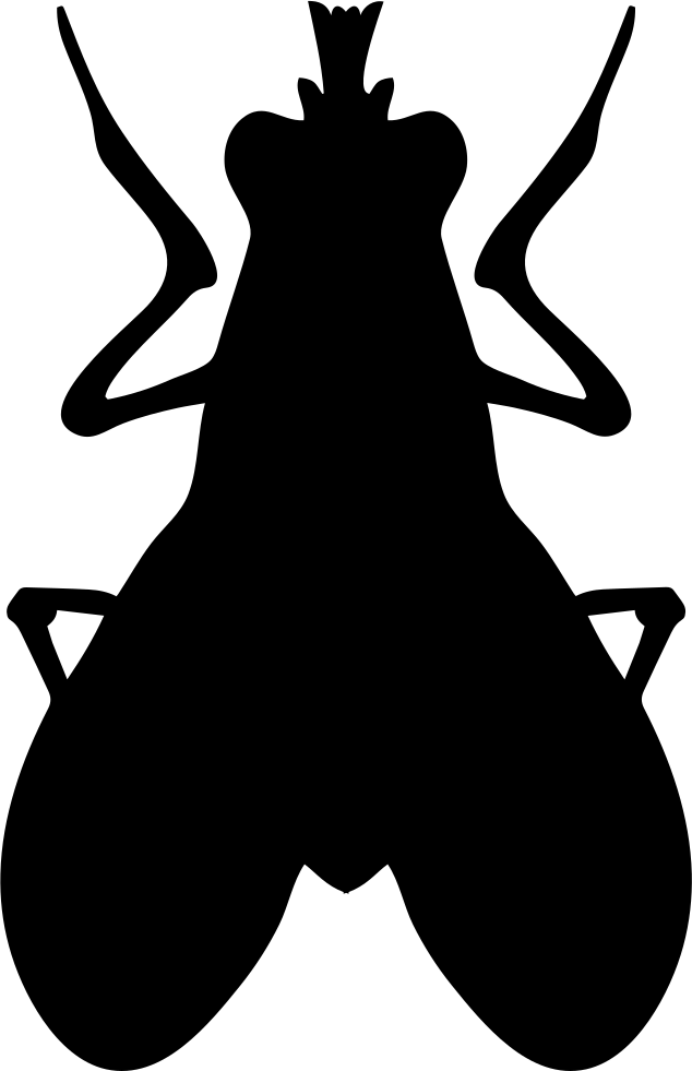 Blow Fly Insect Shape