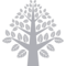 Tree Symmetrical Beautiful Shape With Many Leaves